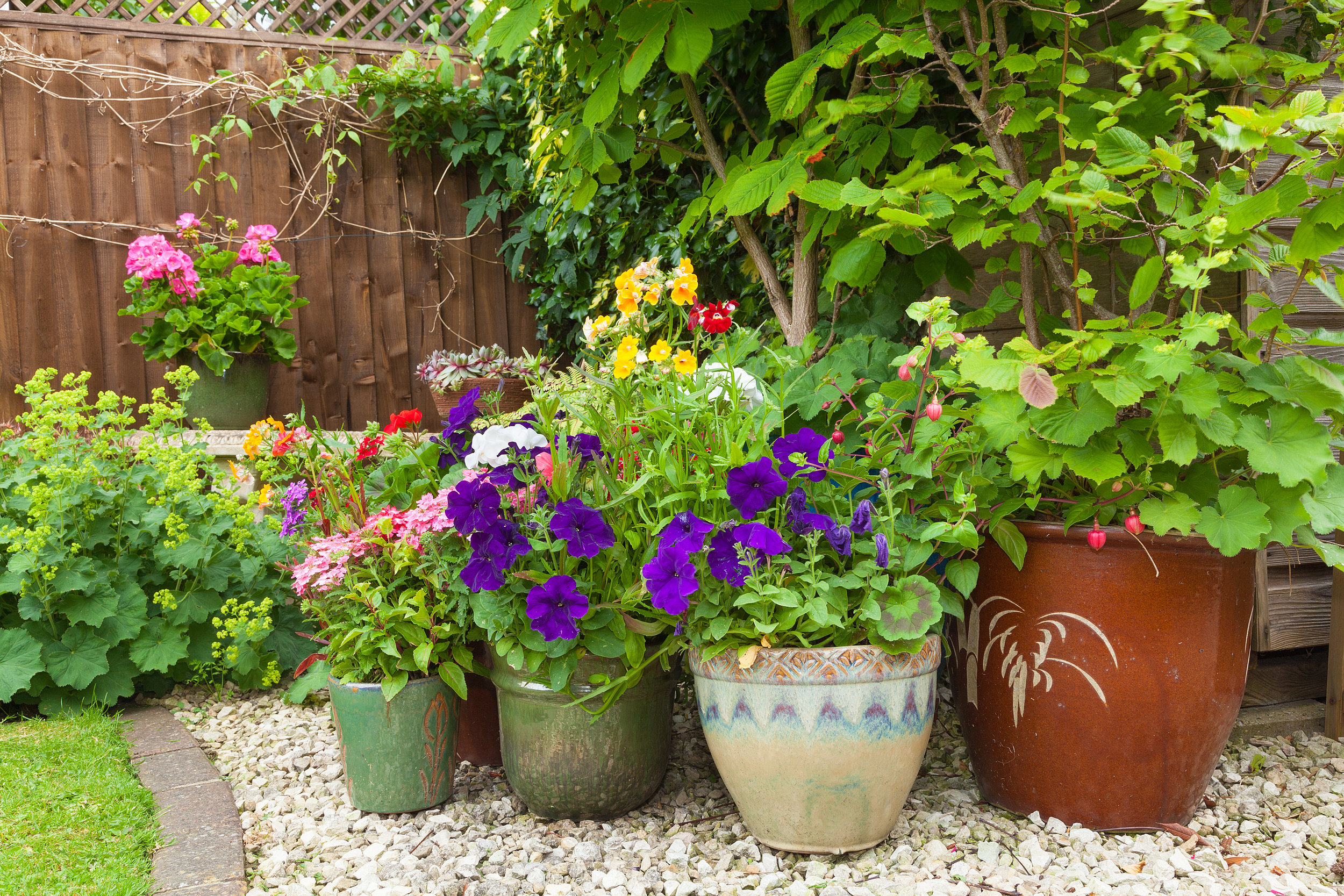 Plant Nursery's Ultimate Guide to Container Gardening in Bergen County, NJ
