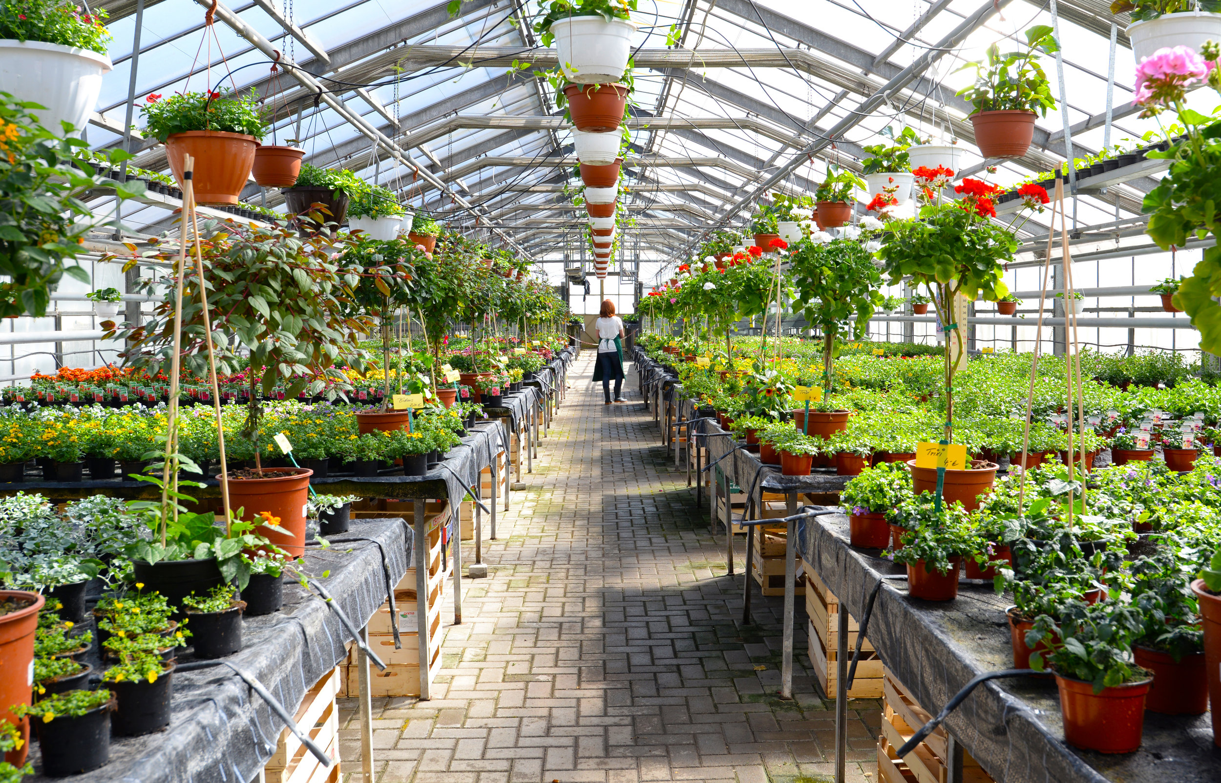 Our Garden Center's Favorite Plants for Your Customers in Hudson Valley, NY