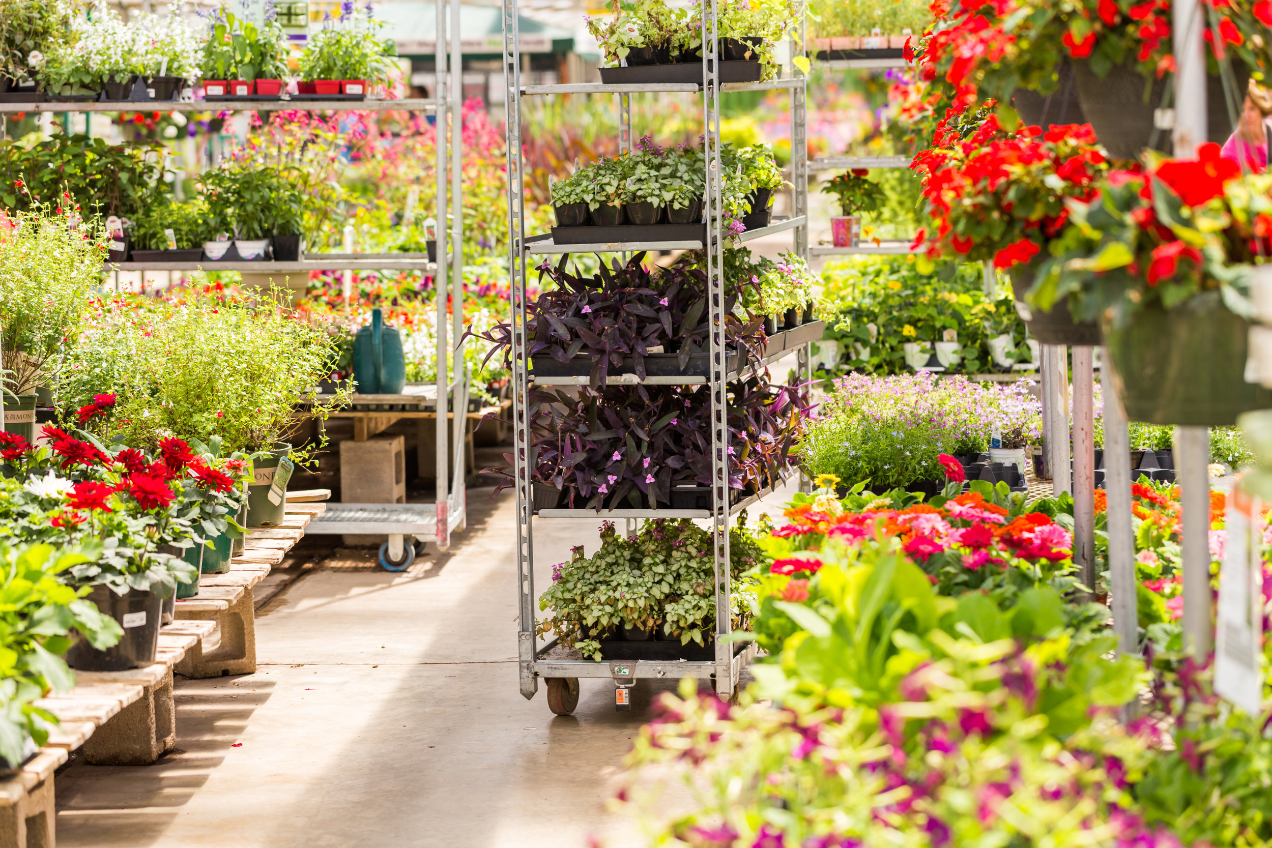 Benefits of Getting All of Your Landscape Supplies at a Wholesale Nursery in Sussex County, NJ