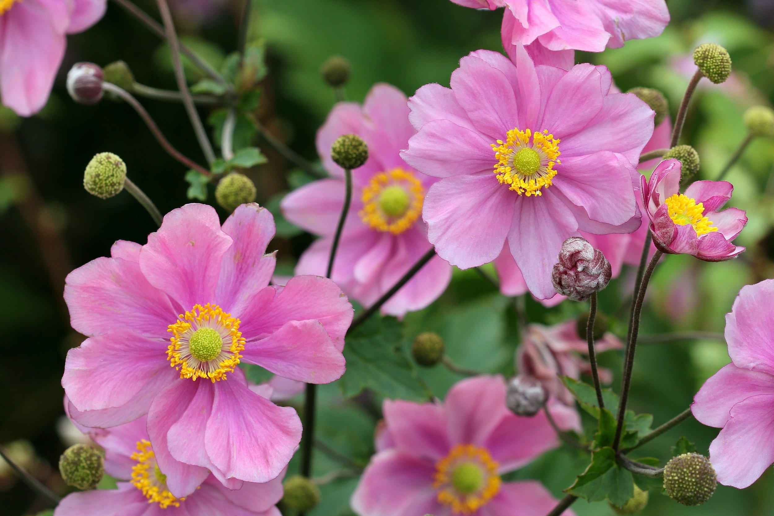 10 Perennials From Our Plant Nursery for a Sussex County, NJ, Backyard