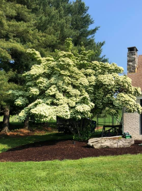 Our Landscape Nursery Recommendations for Your Next Project in the Ulster County, NY, Area