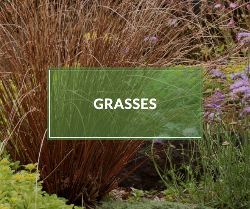 How Grasses And Shrubs From Our Garden Center Can Be Used To