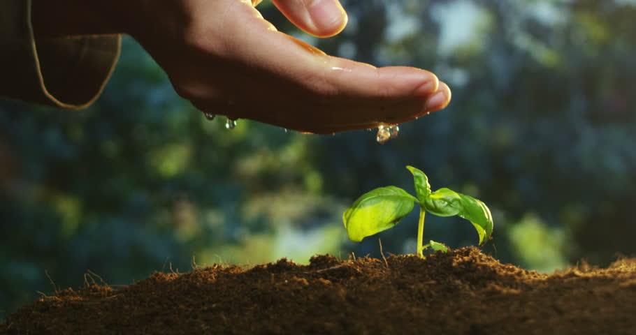 Sowing Seeds_JYG.jpg