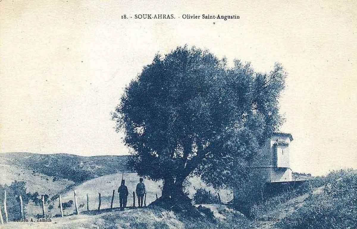 Augustine's olive tree.jpg