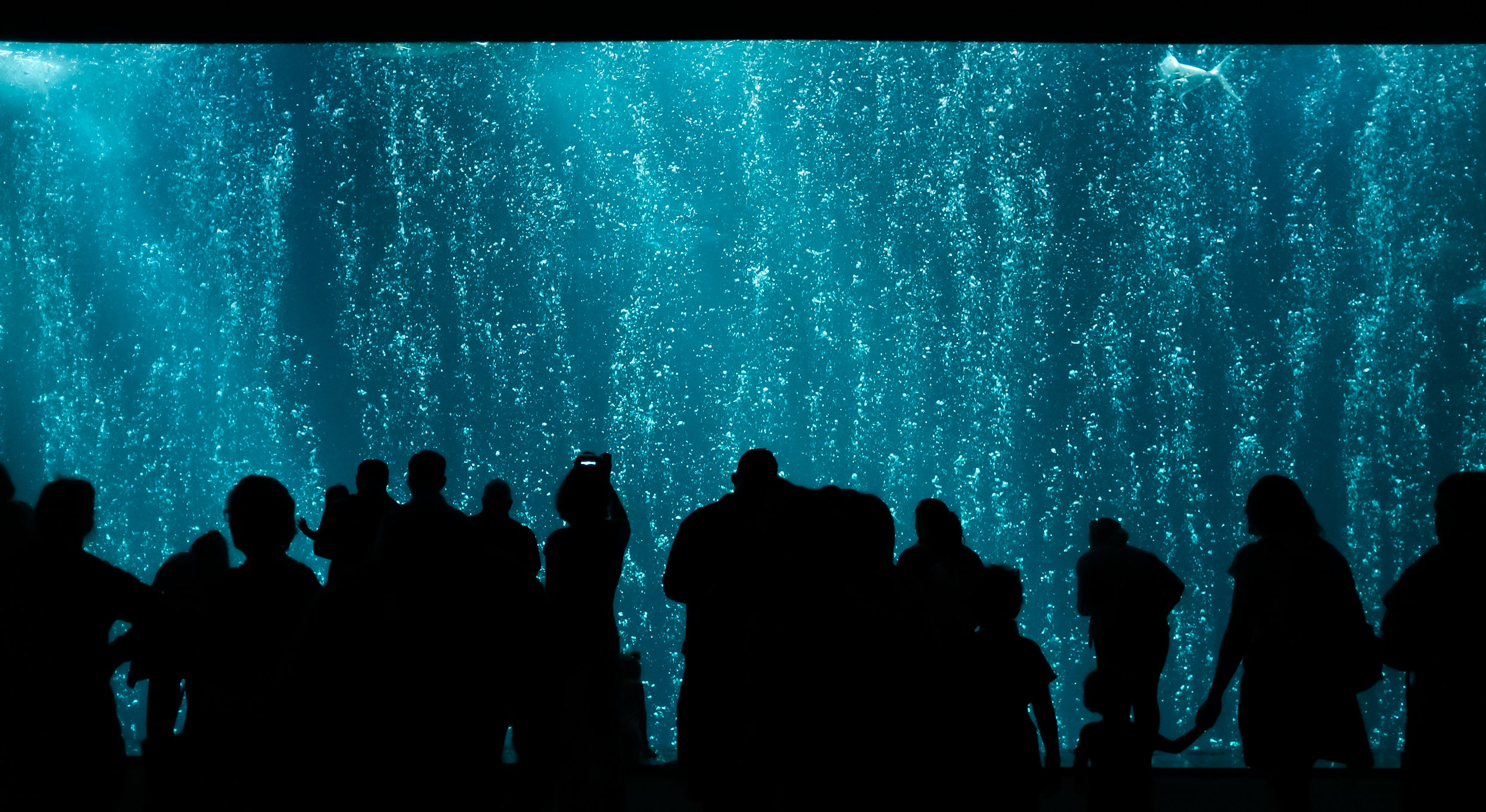 Bubbles at The Open Sea - Monterey Bay Aquarium