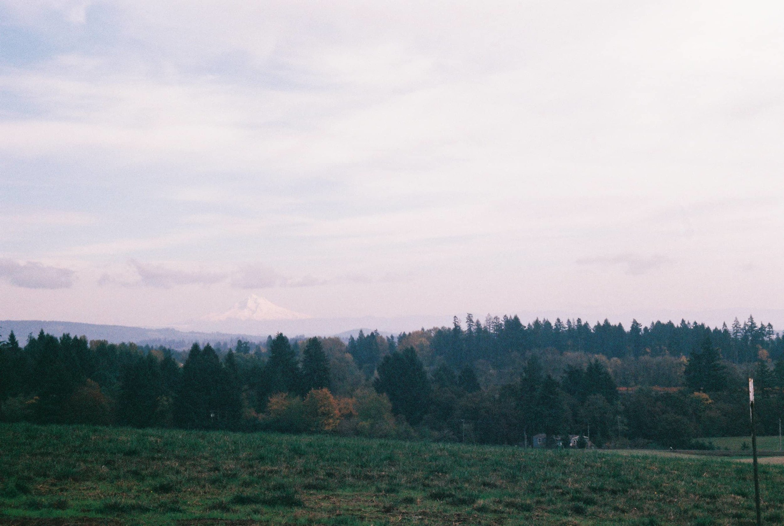 Mt. Hood in the distance from Stoller Winery