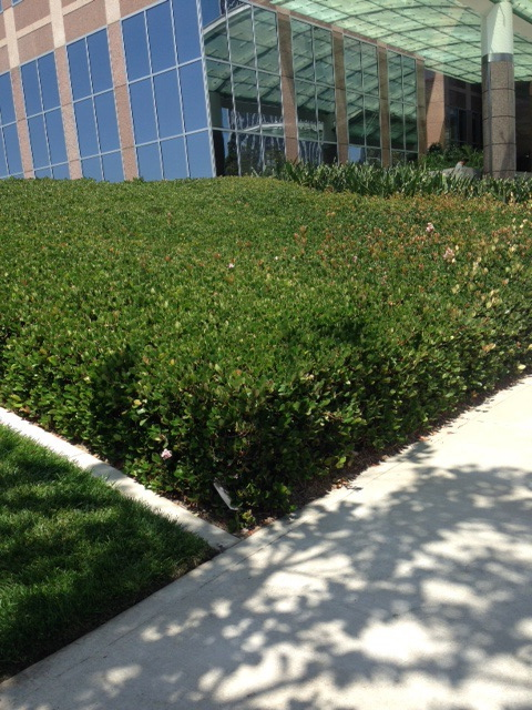 Can you see the envelope hidden in the bushes there at Die Hard plaza?