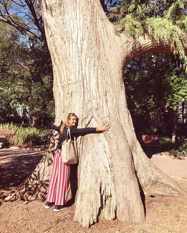 Tree hugging here in SA 🤗🇿🇦 Have a great Sunday! • • #treehugger #treehugging #capetowngardens #capetown #wanderlust #alive #intenselyalive #travelandlife #lifeandtravel #travelgirls #southafrica #travelwomen #capetownsouthafrica #southafricatrip #capetowntourism #southafricatourism #wanderlustlife #travelholic #travelguide #comunalgarden