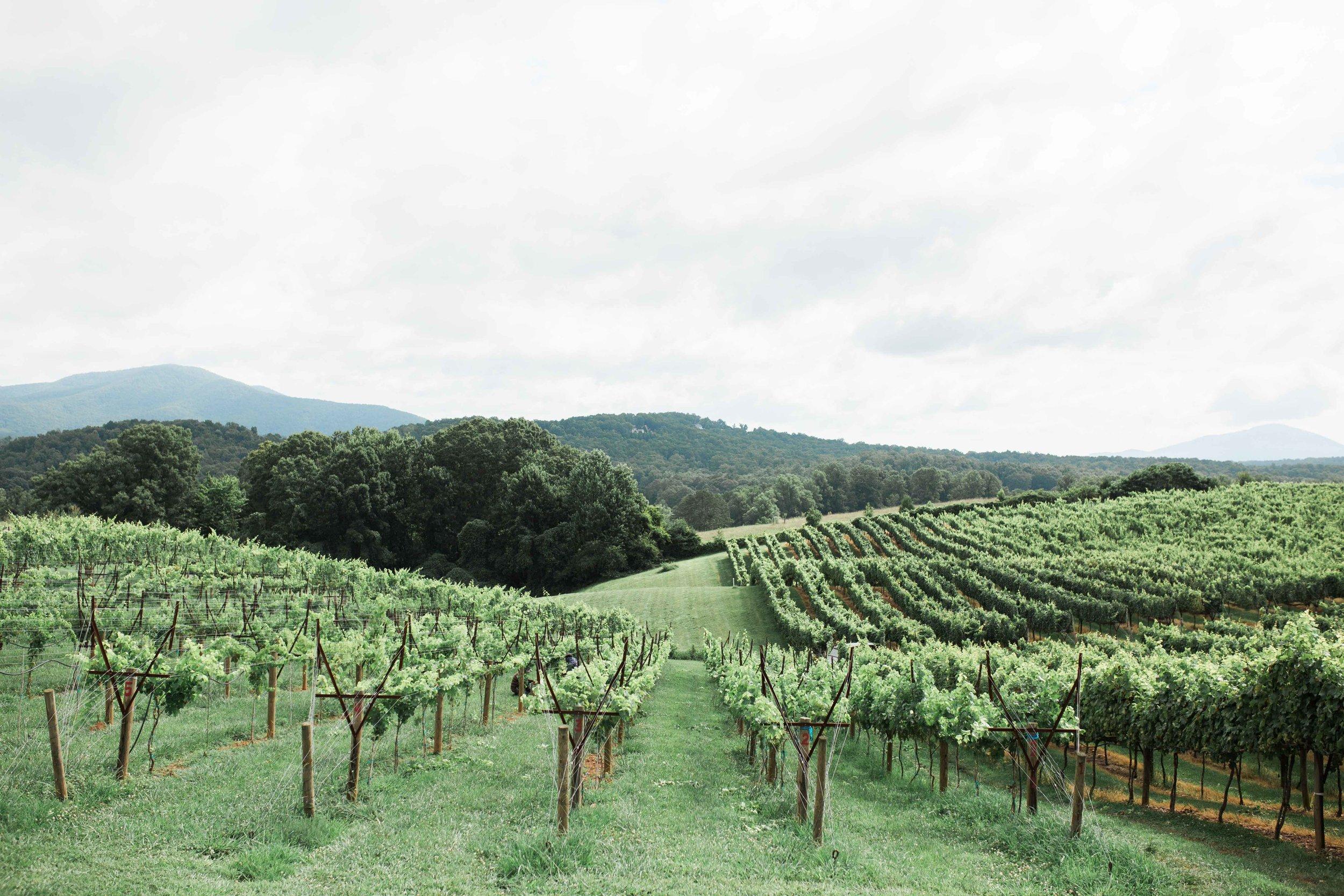 Kaya Vineyards North Ga