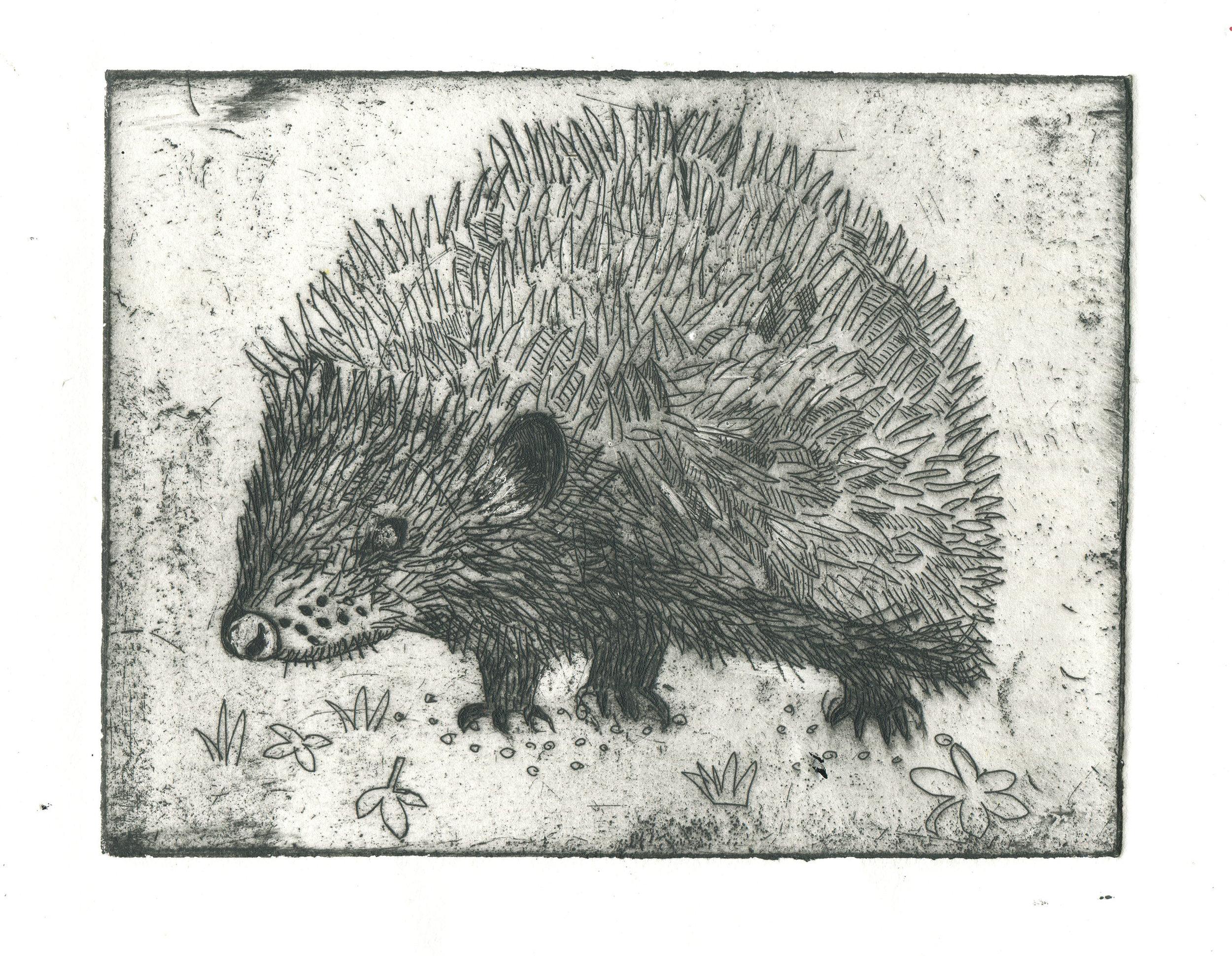 etching of a hedgehog.jpg