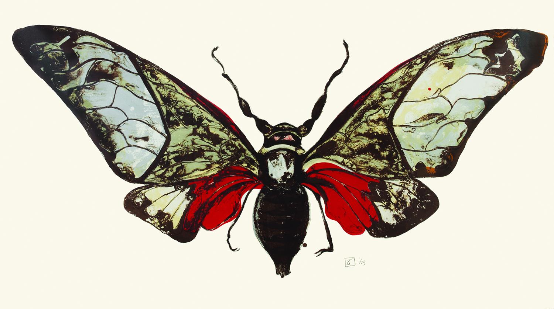 Graham-Salvazana-Imperialis-colour.jpg