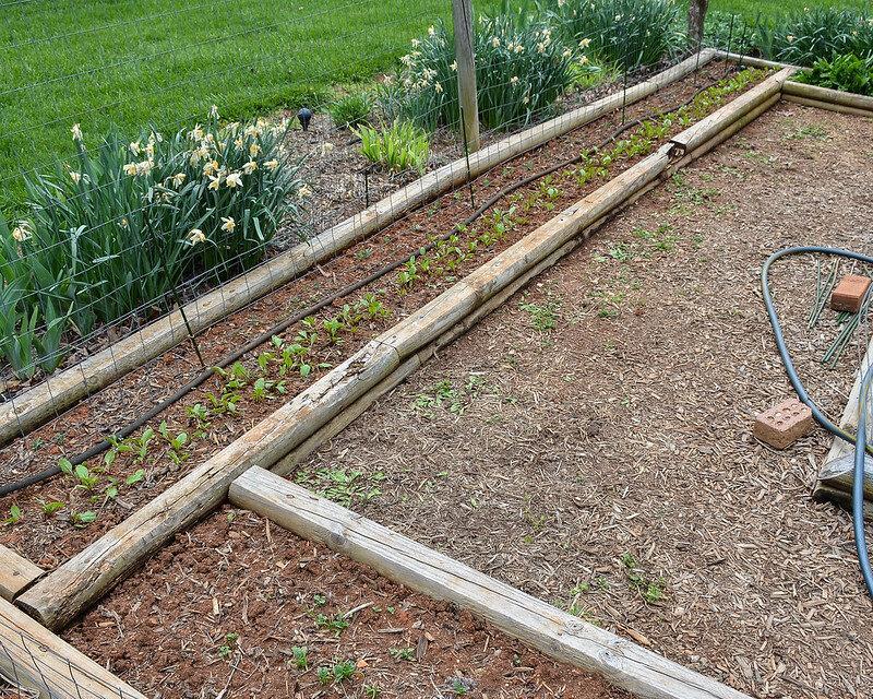 Garden Blog Corner Store Garden Center