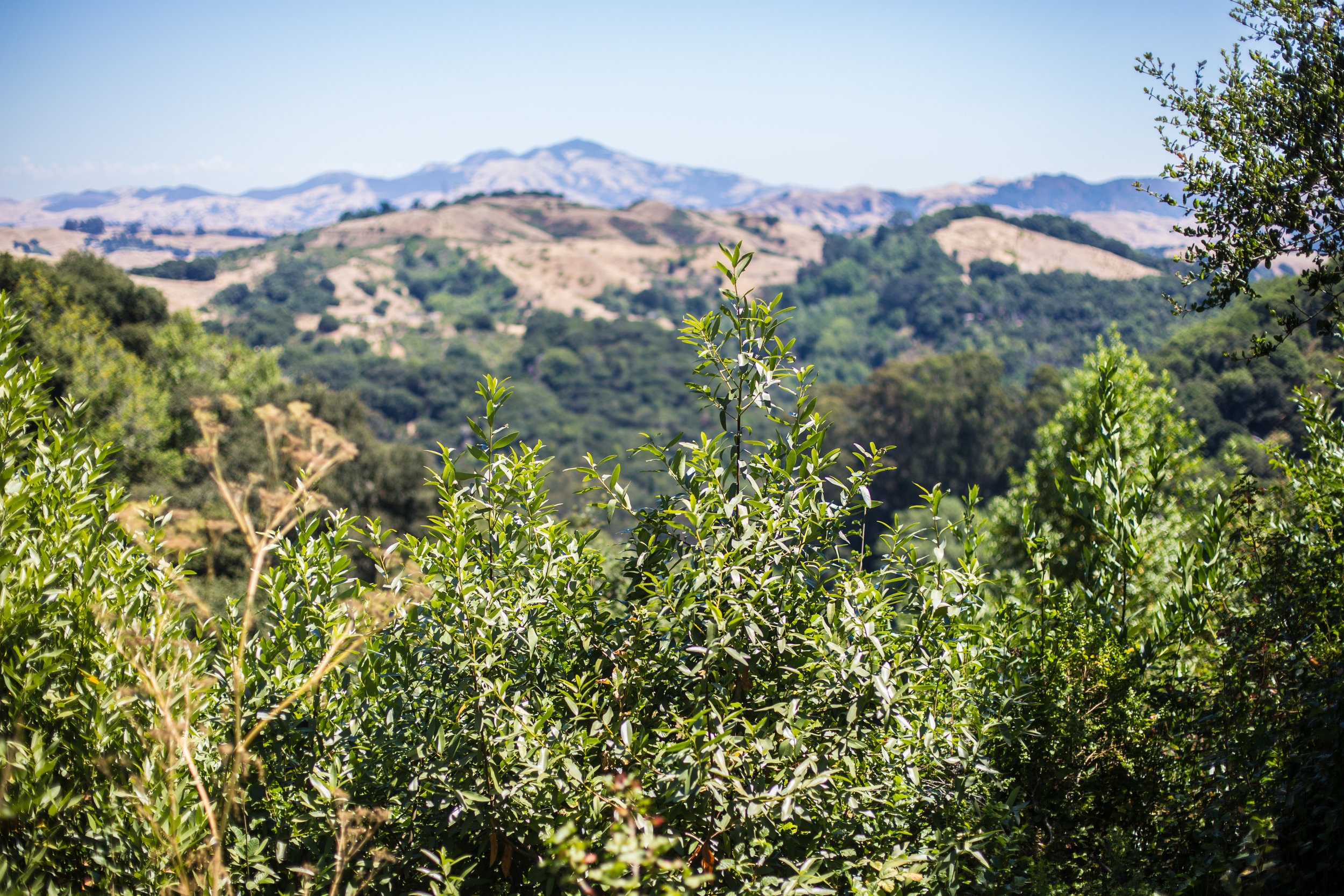 These California hills. I am amazed at how many parks and reserves that are here for a day hike. This was so peaceful and much needed after work! My mood is always lifted after a little bit of nature time.