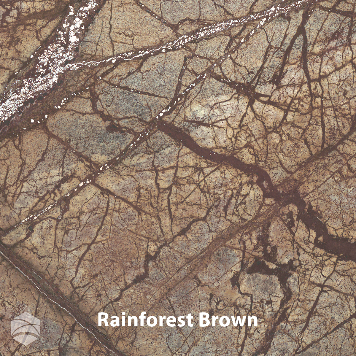 Rainforest Brown_V2_12x12.jpg