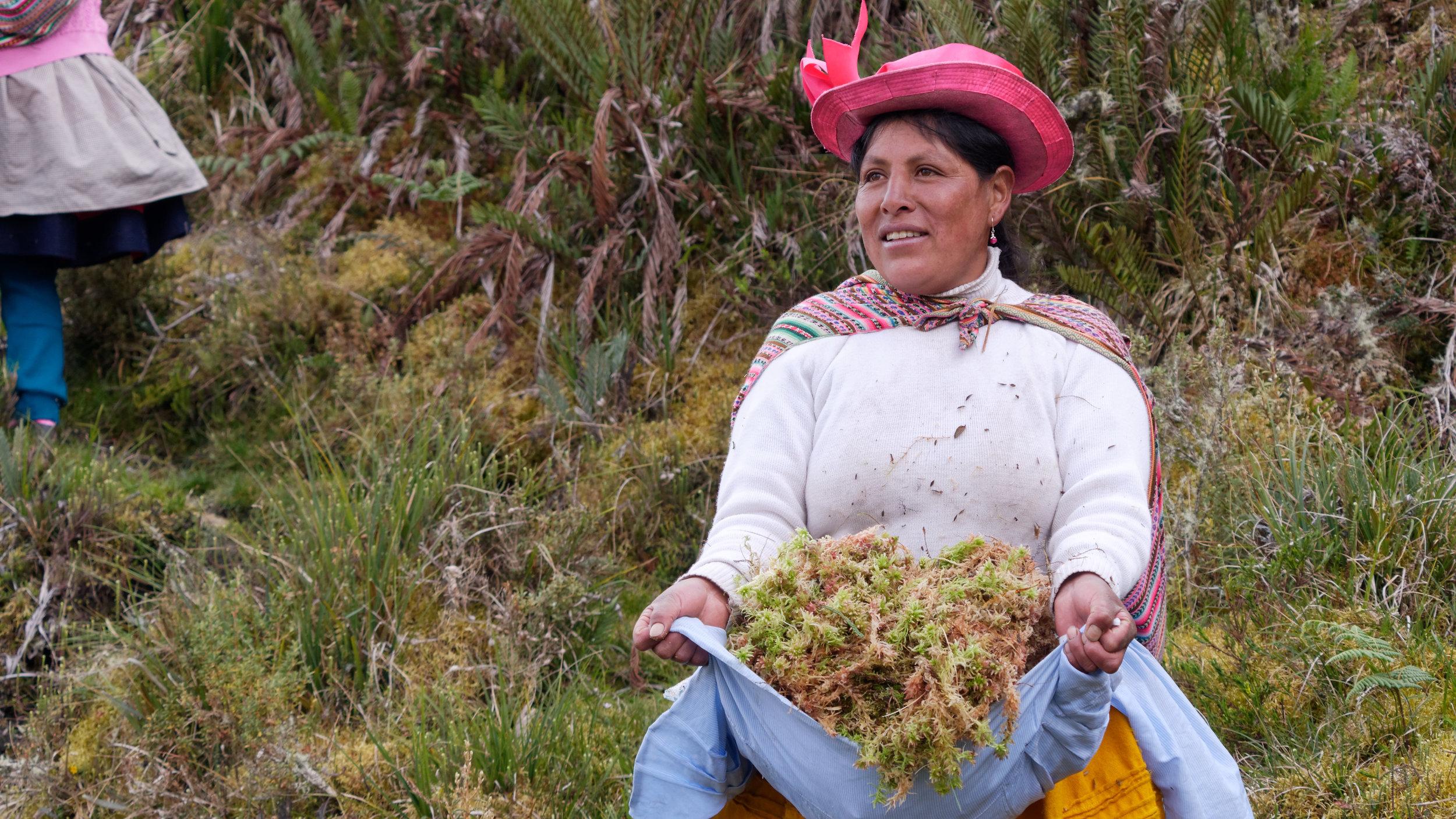 Inka Moss - Peru.jpg