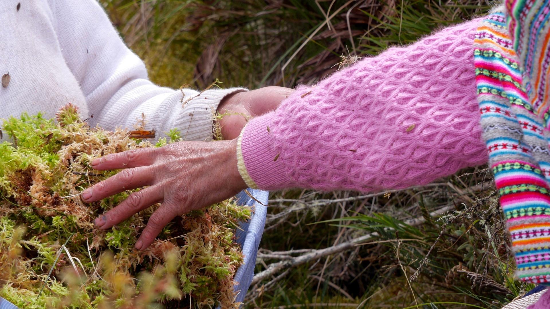 inka-moss-hands.jpg