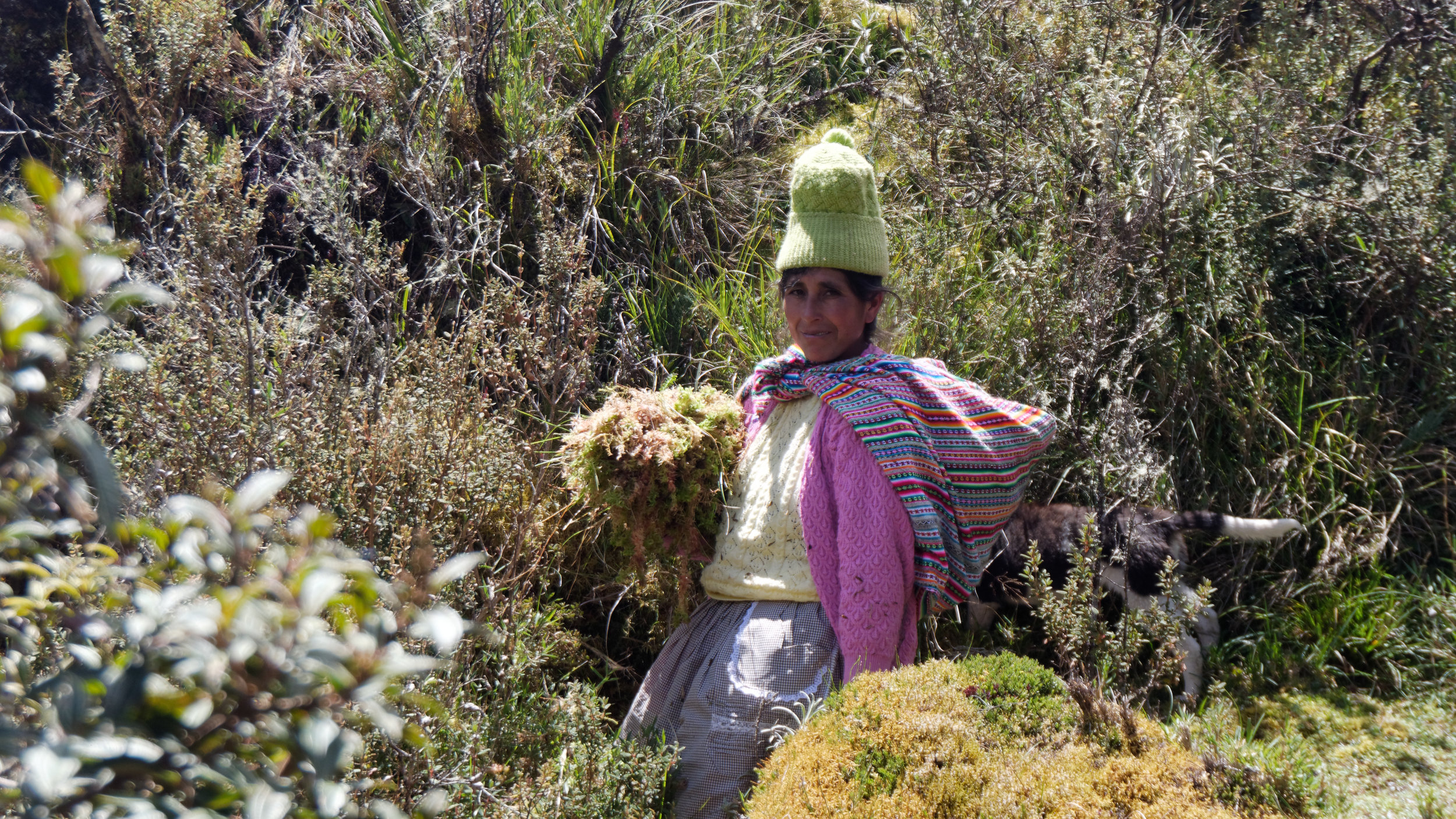 INKA MOSS      Farmers use solar technology to grow moss, overcoming the challenges posed by climate and market prices for more traditional products.