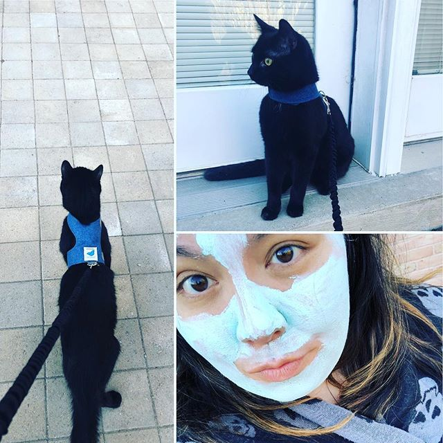 🖤 took our void bb for a walk in a face mask and skulls. peak witch or peak crazy cat lady? 🔮✨you decide🤷🏽♀️ #catlife #stayweird #finnthecat #voidcat #meow #chatnoir