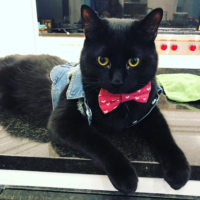 This dapper guy is ready for the Bandit's team photoshoot! All he needs is for me to make a tiny lets get weird back patch and get him a fuck the pawtriarchy button.  #catlife #furbaby #finnthecat #blackcat #void #letsgetweird #scbandits
