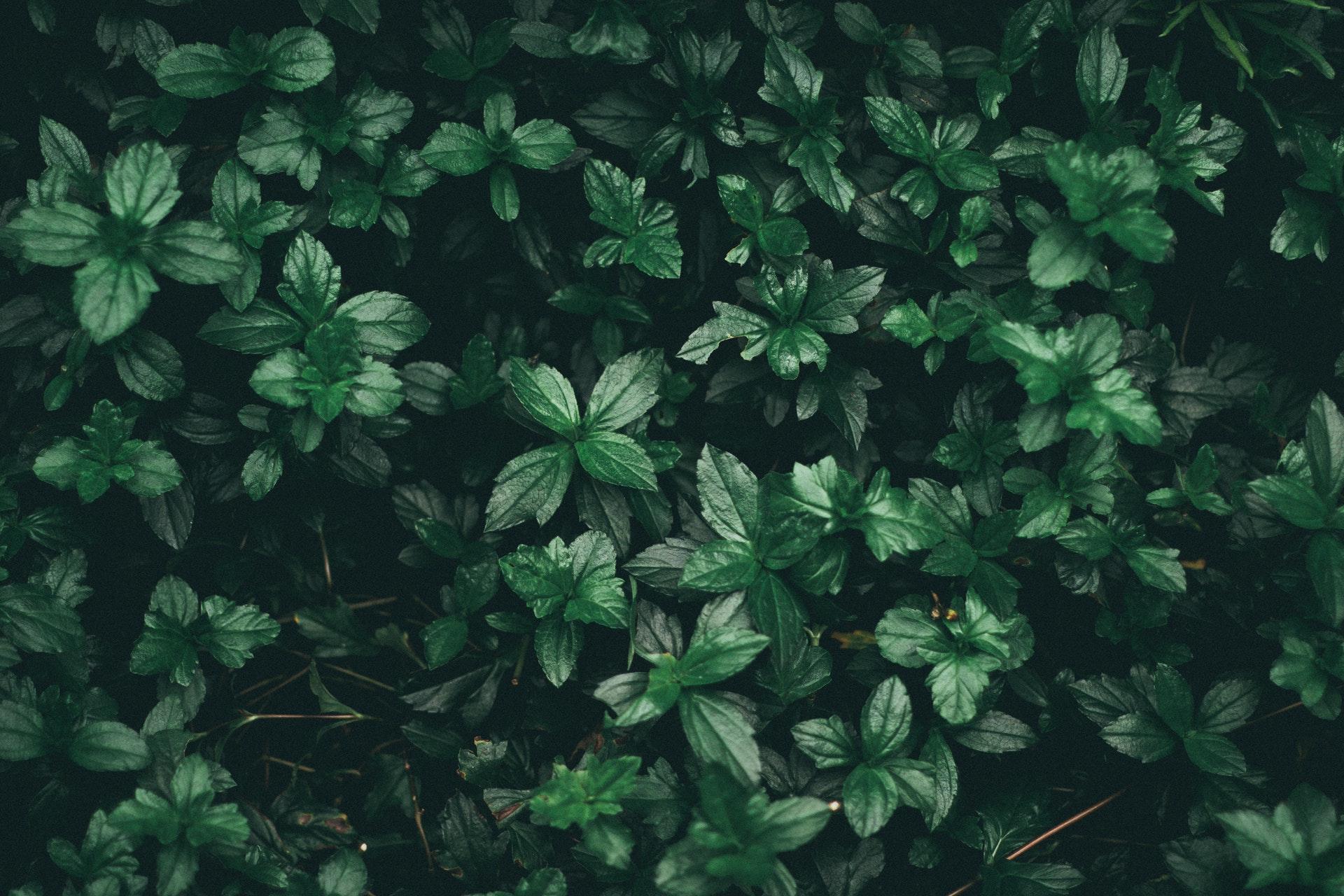 pexels-photo-808510.jpeg