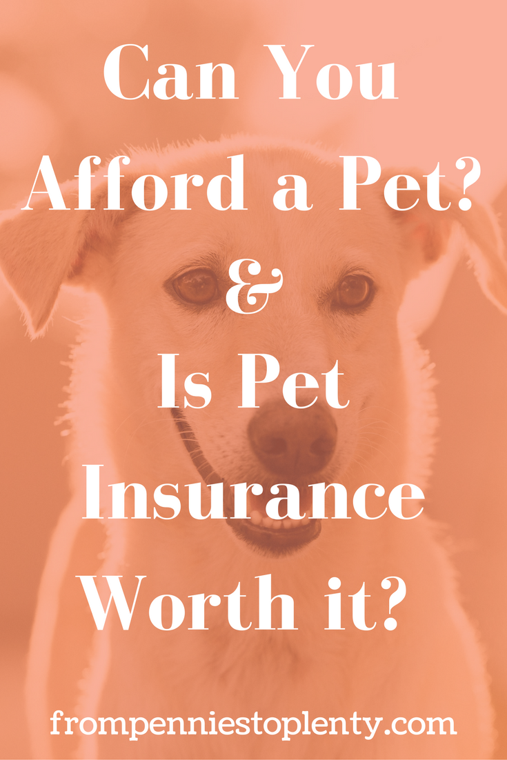 Can You Afford a Pet? & Is Pet Insurance Worth it?