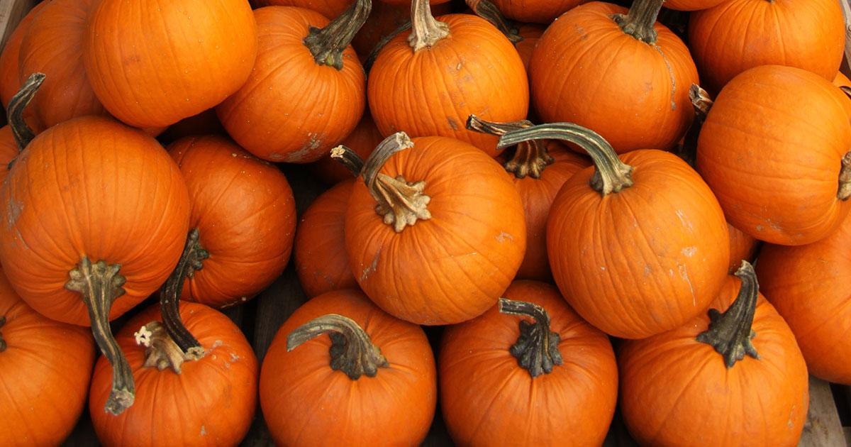 Pumpkins-Blog-1200x630.jpg