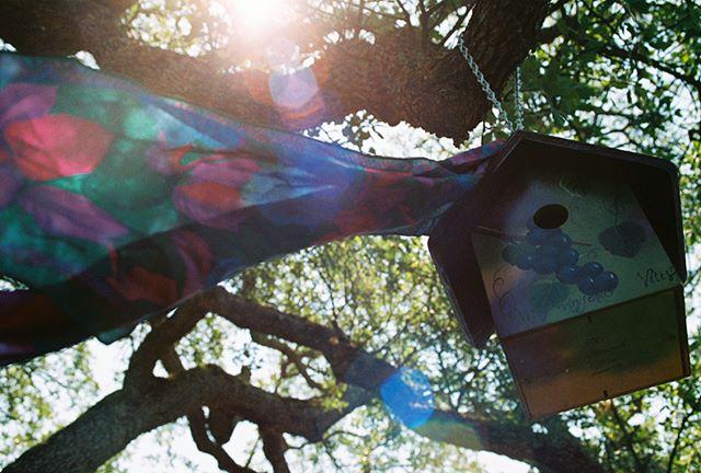 Árbol de la Vida 🌳 . . . . . . . . . . . . . . . . . . . . . . . . . . . . . . . . . . . #filmphotography #kodak #california #birdhouse #35mm #analogphotography #analog