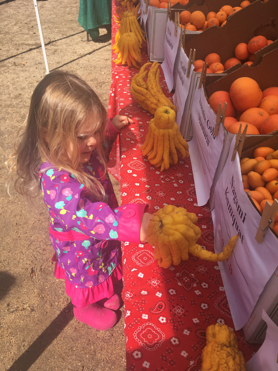 """One of the younger visitors at the Santa Monica farmers market in Virginia Avenue Park, admiring the exotic and unusual """"Buddha's Hand"""" citrus fruit sold by vendor Murray Family Farms in Santa Monica, Calif. on March 3, 2018. (Photo by: Claudia Vardoni)"""