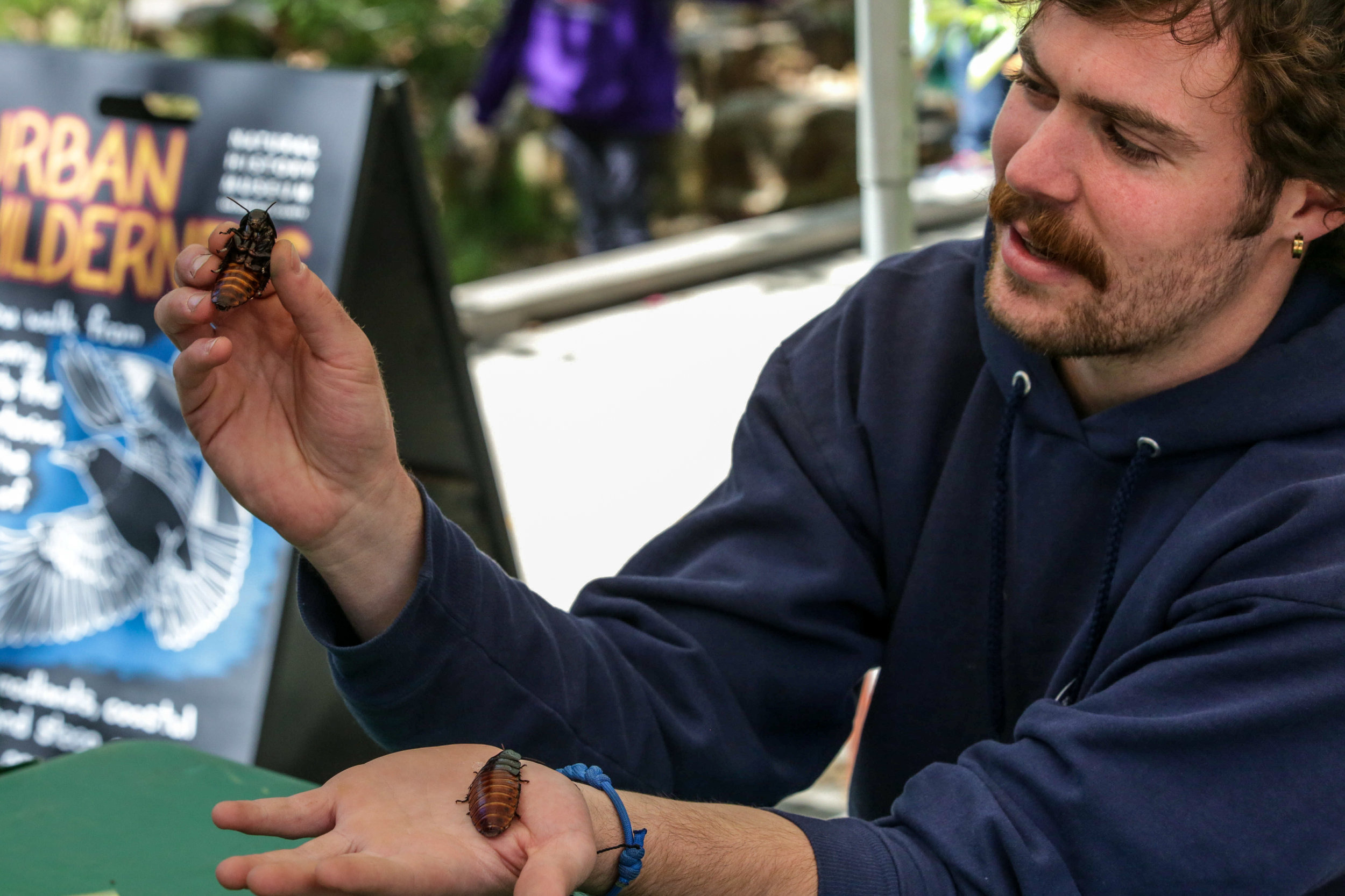 Urban Wildness shows Madagascar Hissing Coachroaches to the children attending the Los Angeles Nature Fest. Those and other creapy crawlers were on display at the Natural History Museum on the University of Southern California campus, Los Angeles, California. Events took place on Saturday, March 17, 2018 (Corsair Photo/William Wendelman)