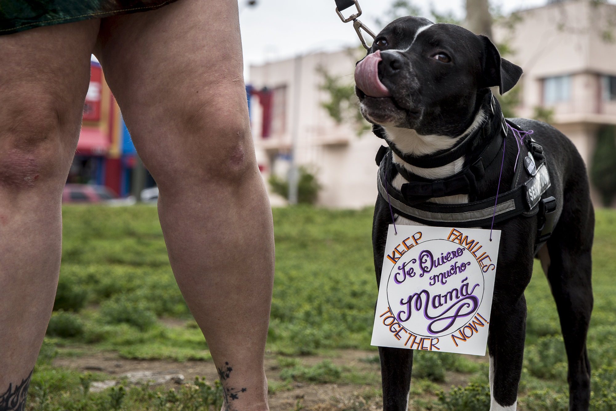 "Sally the dog has a sign around his neck that reads, ""Keep families together now!"" during the undocumented immigrant mother's rally that took place at MacArther Park in downtown Los Angeles California, on Saturday, May 12 2018. The rally, organized by immigration advocacy group Movimiento Cosecha, called on the Trump administration to provide permanent protection for undocumented immigrants in the U.S. and to stop tearing mothers away from their children. (Matthew Martin/Corsair Photo)"