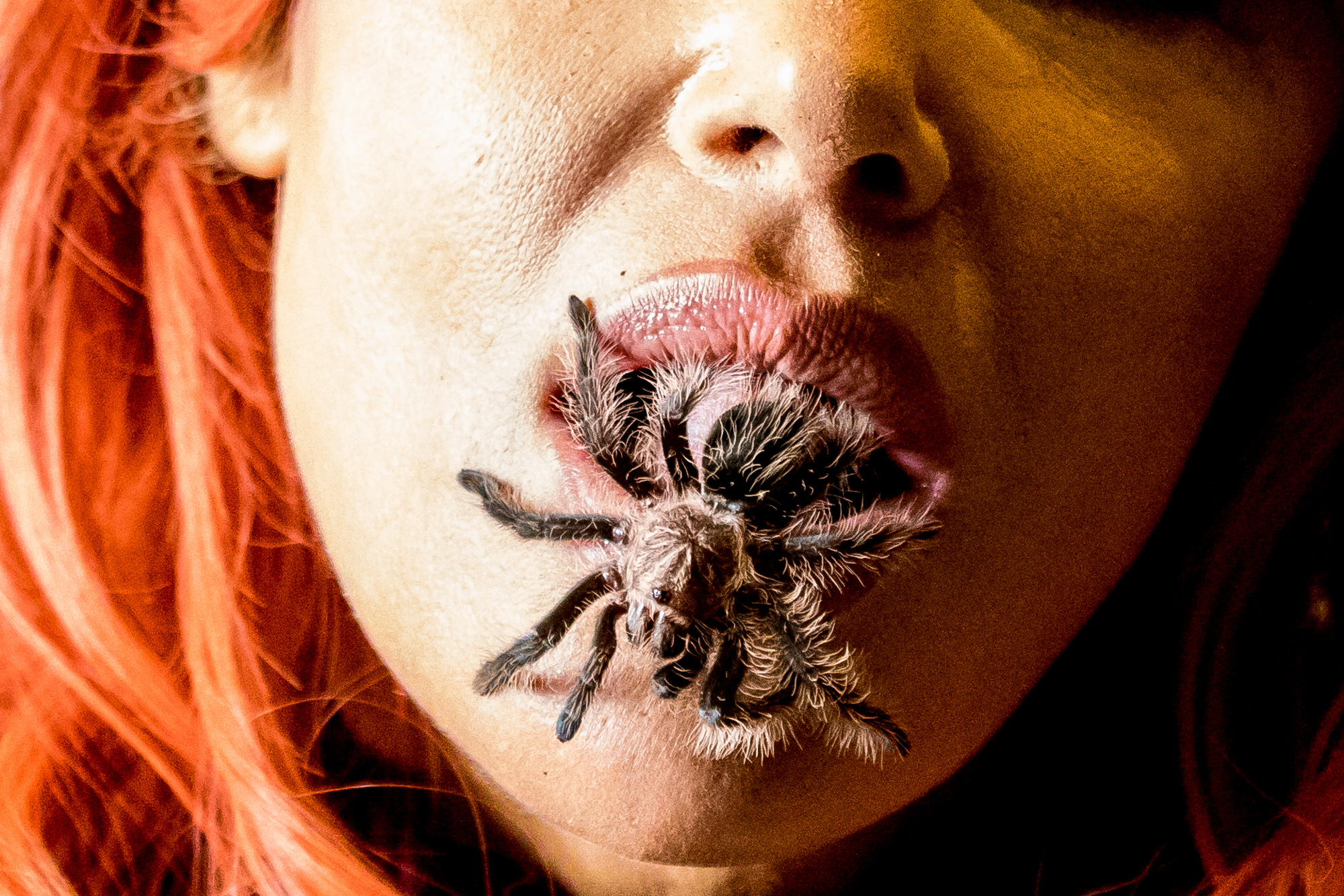 A Tarantuala crawls out of Diana Terranova's mouth during the Los Angeles National History Museums 32nd Annual Bug Fair. Terranova perfomred this act to educate the crowd on the misconceptions of how dangerous tarantuals are. The Bug Fair took place on May 19, 218. (Zane Meyer-Thornton/Corsair Photo)