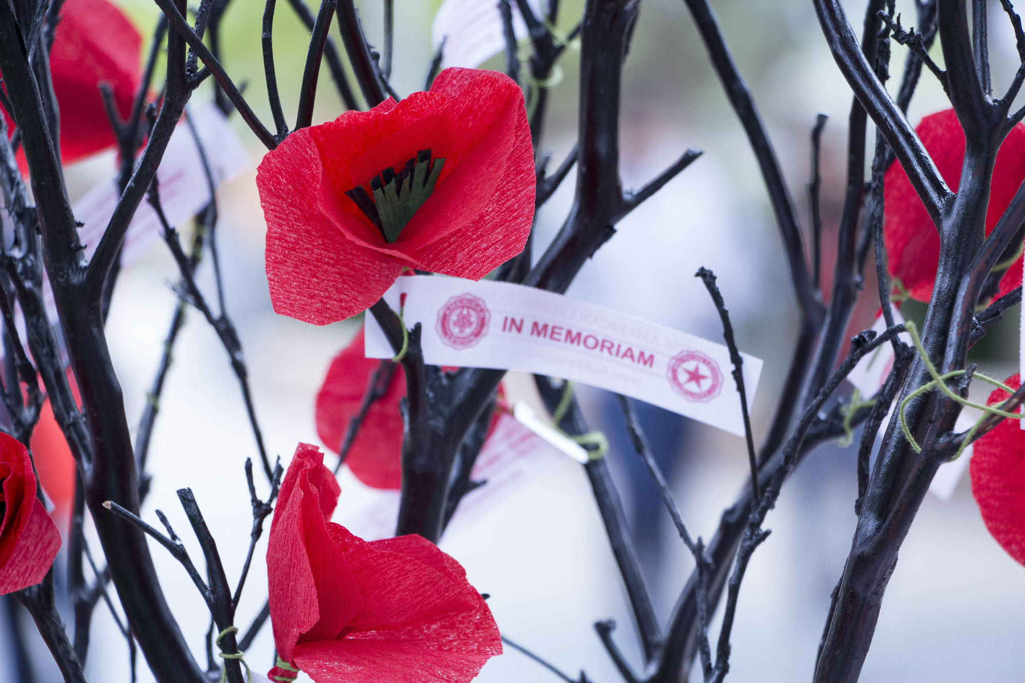 """Handmade red poppies, the official symbol of rememberance inspired by John Macrea's poem """"In Flanders' Fields"""" at Santa Monica College's Memorial Day Commemoration in Santa Monica, California on Thursaday May 24, 2018 (Wilson Gomez/Corsair Photo)"""
