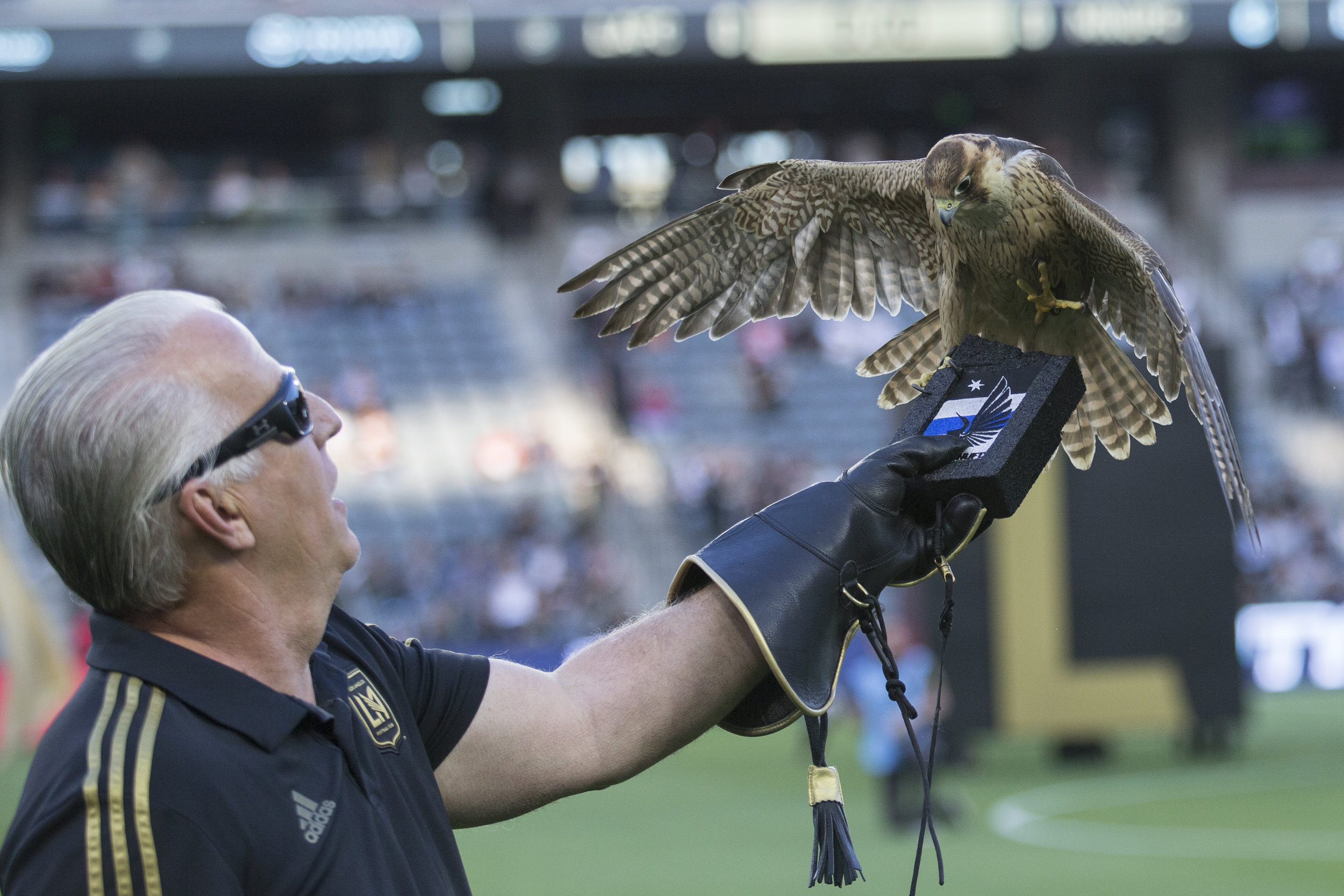 The Los Angeles Football Club (LAFC) mascot, Olly the Falcon, (named after Olvera Street) ends his pre-game fly around at the Banc of California Stadium on May 9, 2018. LAFC beat the Minnesota United Football Club 2-0. (Zane Meyer-Thornton/Corsair Photo)
