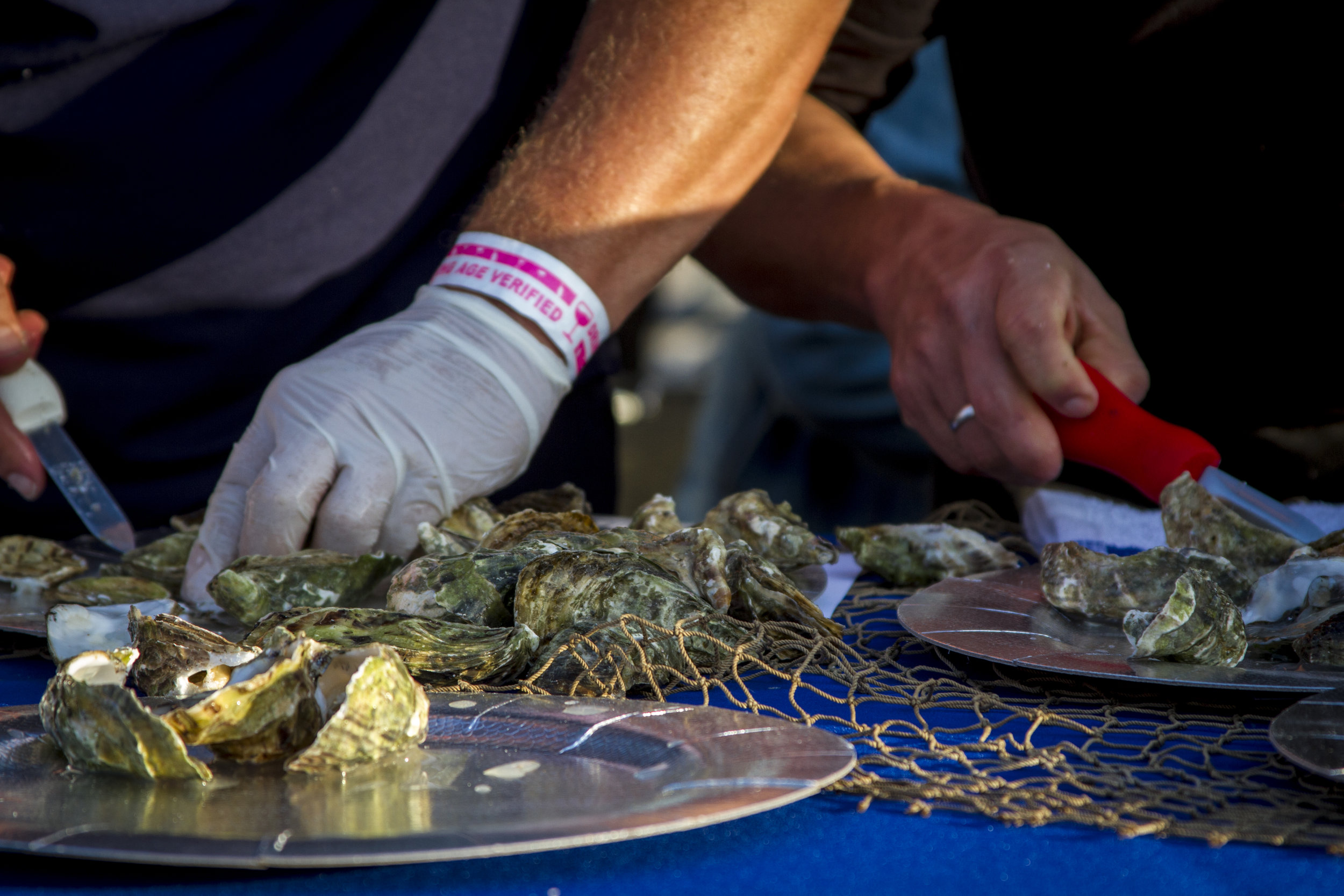 Close up of the compeitors shucking oysters. At Off the Hook Seafood Festival. Oct. 6, 2018. By Yasser Marte.