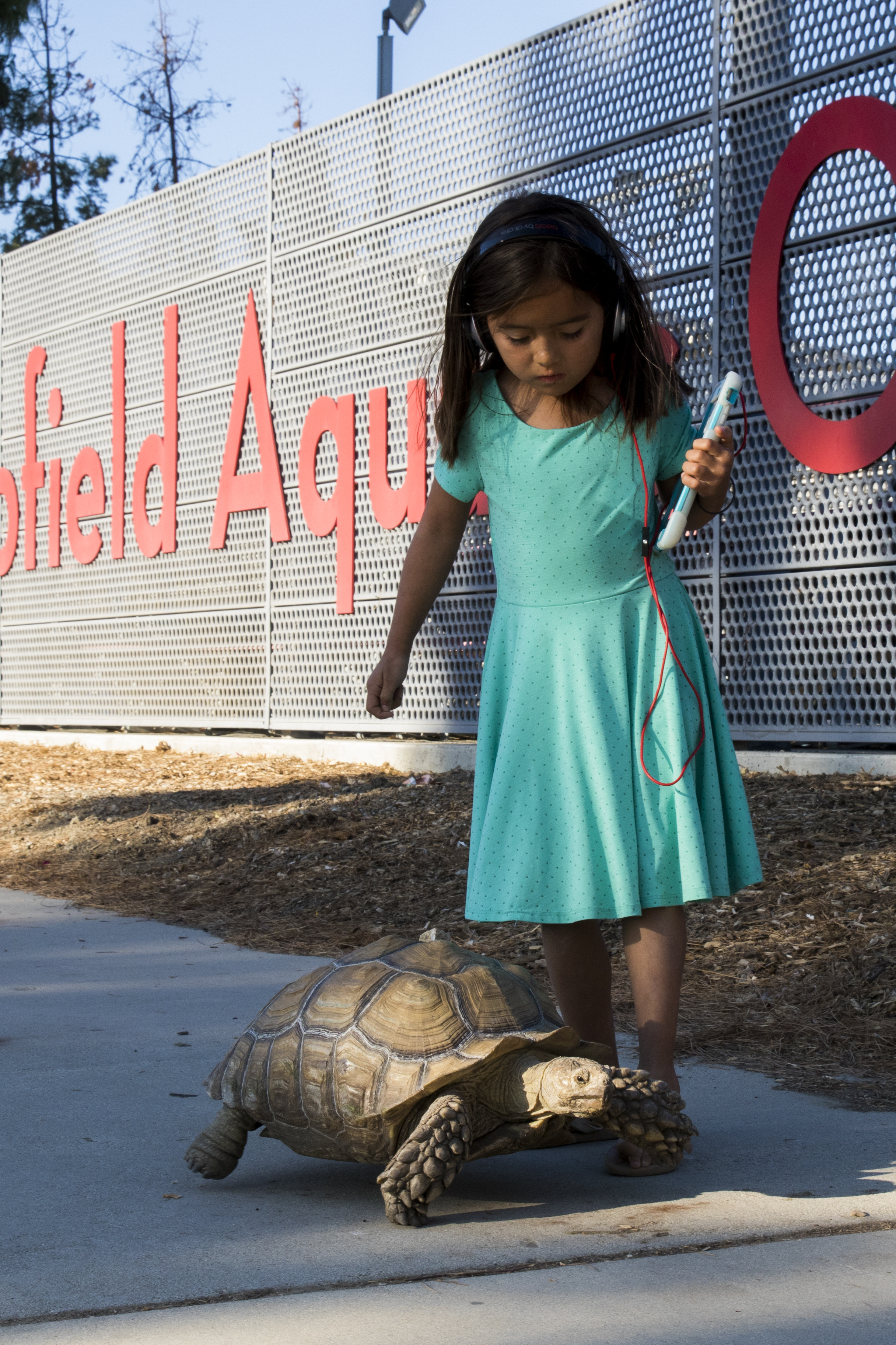 The daugher of the D'Amore family keeps a watchful eye over their family tortoise, Betty at their evacuation center at Pierce College in Woodland Hills, California on November 9, 2018. The D'Amore family evacuated their home in Westlake at 2 AM the previous night. (Zane Meyer-Thornton/Corsair Photo)