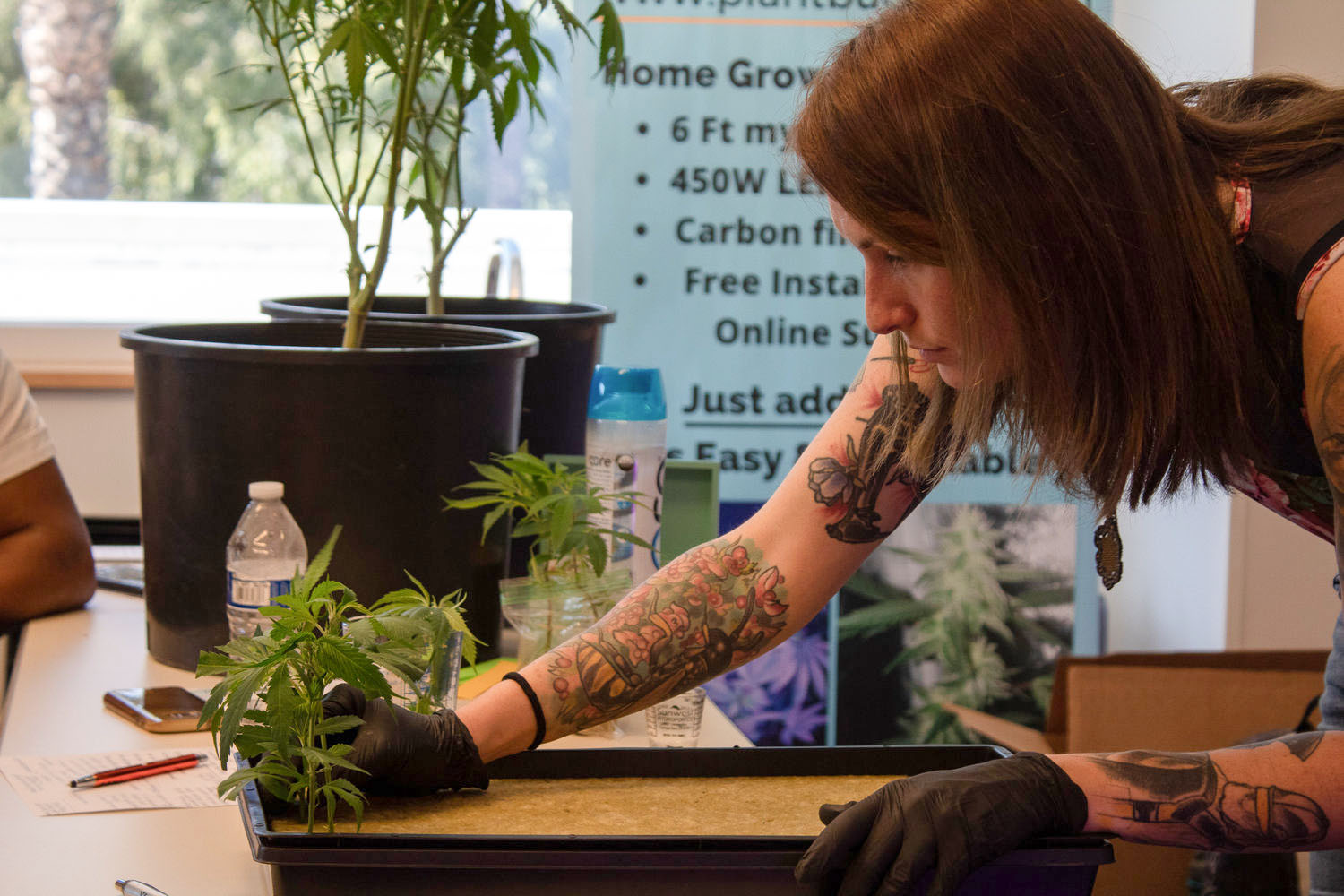 """Alyssa Sullivan during Plant Buddies' educational event on growing cannabis at home. Hosted by the Santa Monica Public library on March 10, 2019, in Santa Monica, California. """"I think as far as flower is concerned I think it's important that people be growing their own flower just to verify what's in it, you know there's so many heavy chemicals in the world that so many cultivators are still using to this day If you're growing your own you have complete control over everything that's going into the plant."""" Photo by Danica Creahan."""