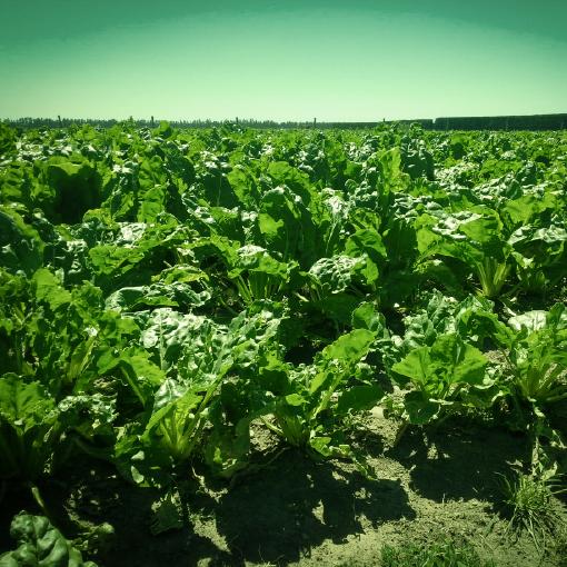 Organibor boron fertiliser