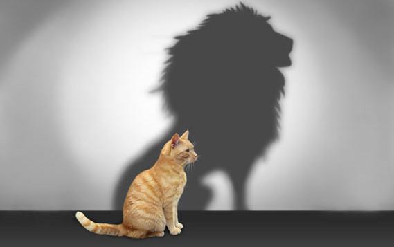 motivation_cat.jpg