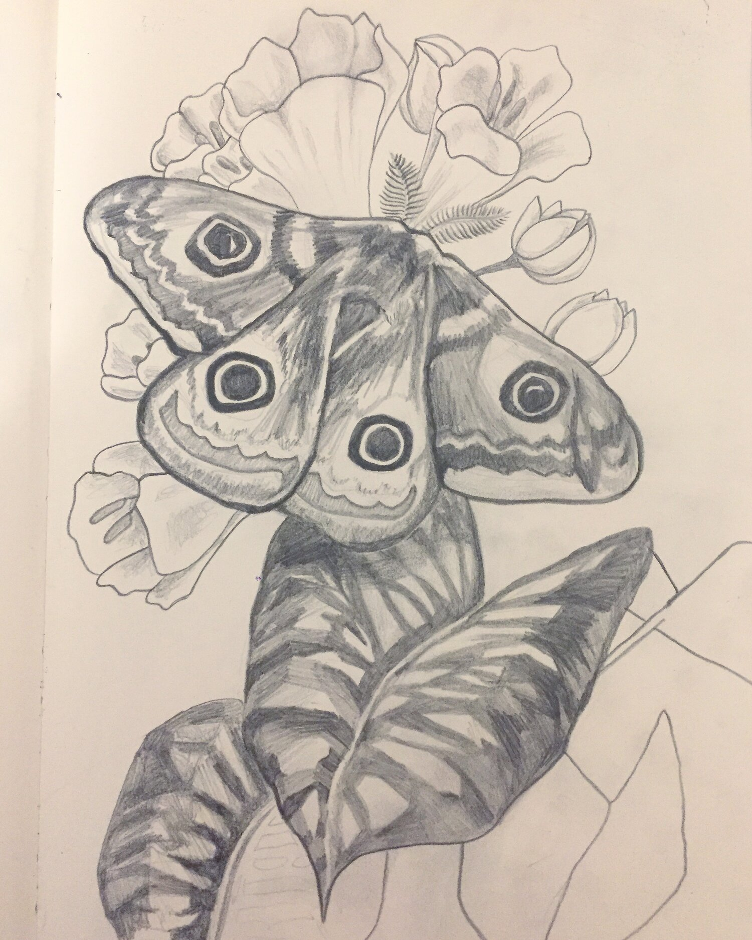Moth (2018),  pencil on paper    14 x 11 in
