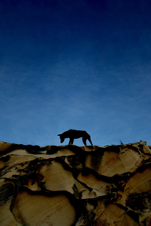Dog Silhouette Tip of Borneo Malaysia.jpg