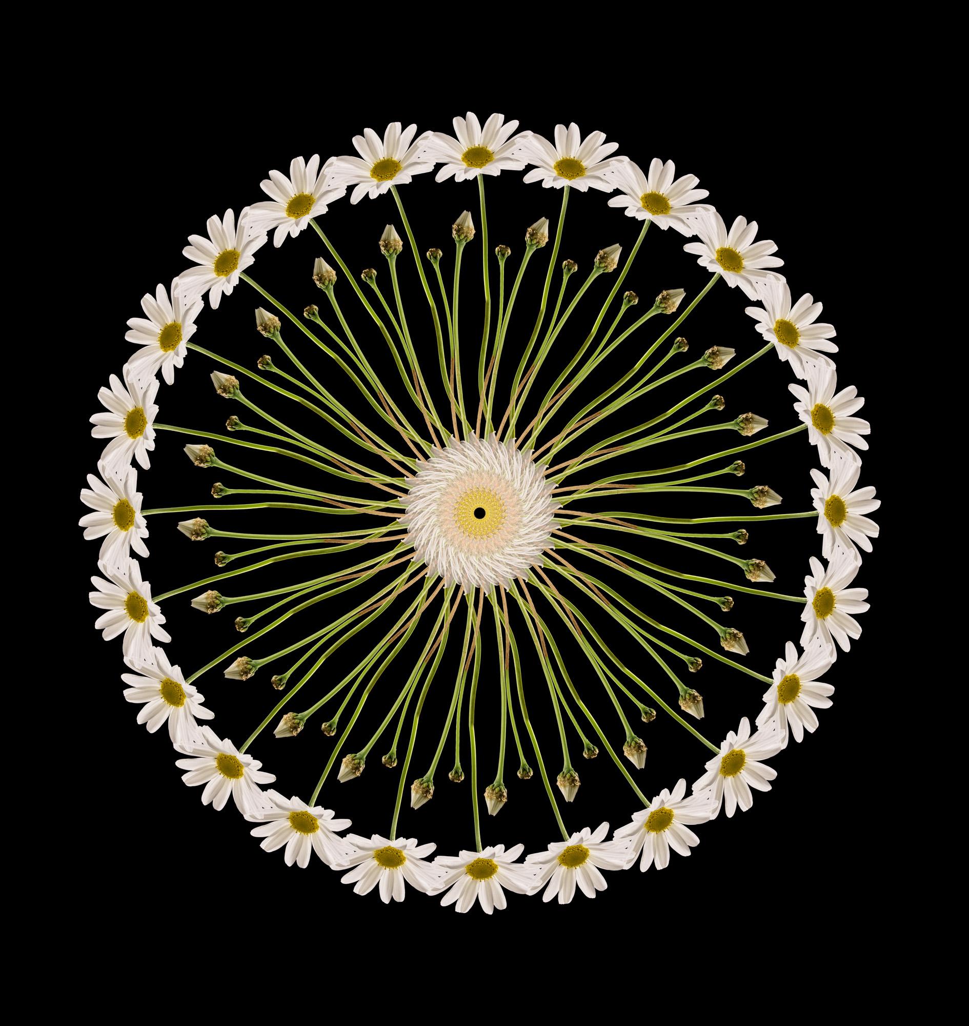 Daisy flowers abstract artwork.jpg
