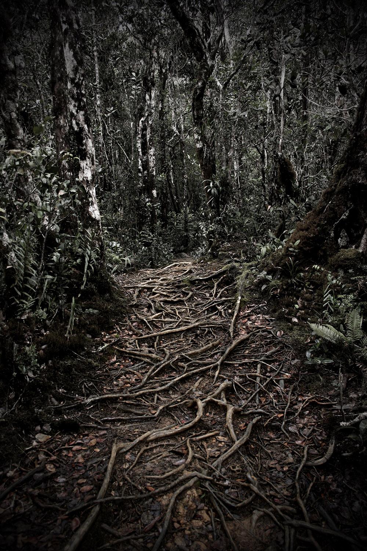 Mesilau Trail Mount Kinabalu.jpg