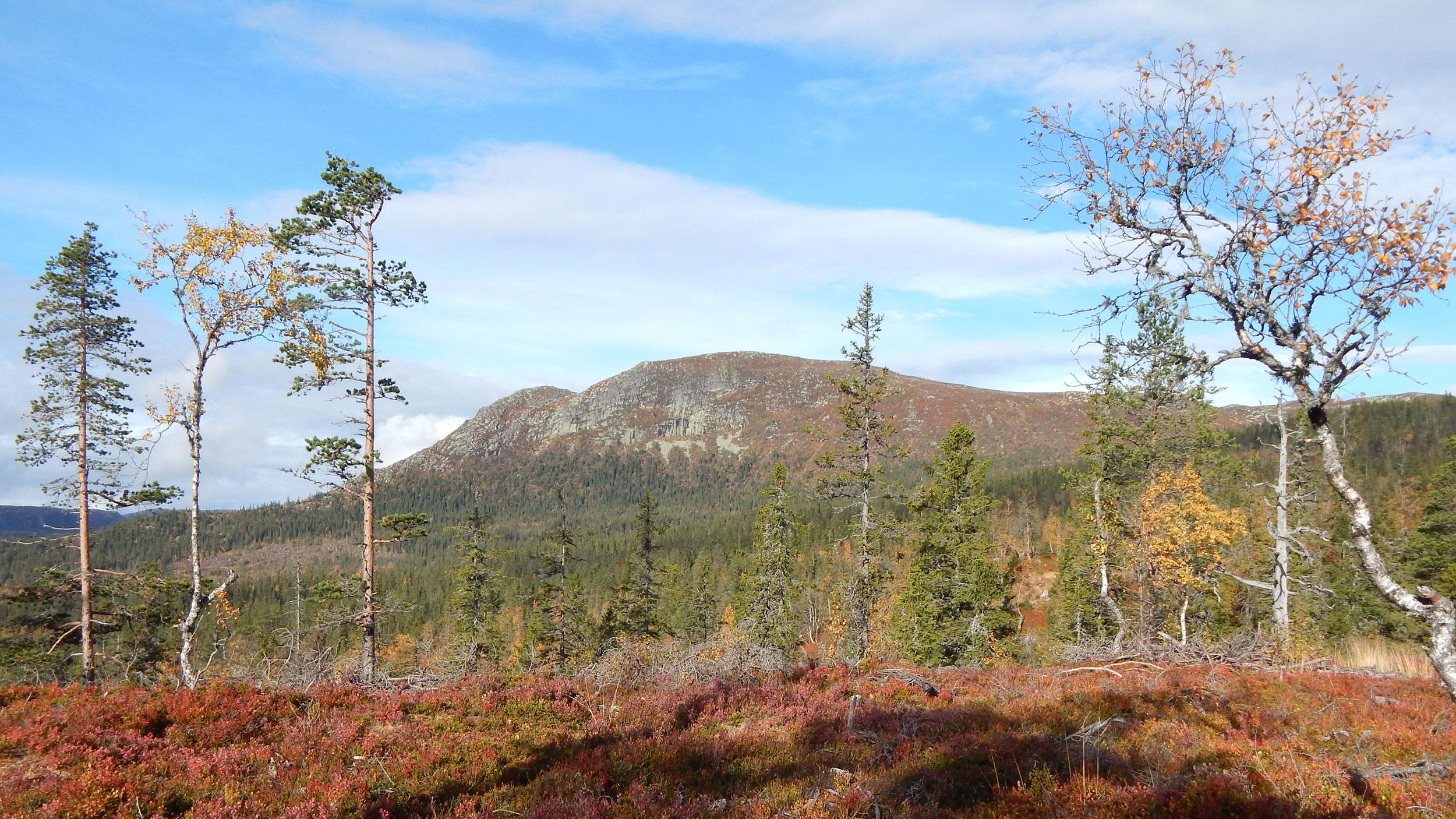Utsikt-fra-tomt-mot-Sorbolfjell.jpg