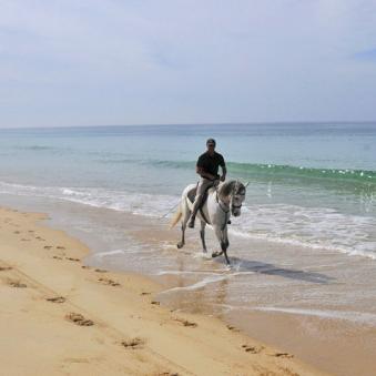 CAVALOS NA AREIA     Le rêve d'une balade à cheval sur les magnifiques plages de Comporta.    O sonho de um passeio a cavalo nas magníficas praias da Comporta.    Estrada Nacional nº 261, Km 6 - Torre - Comporta, 7580-681 Comporta / 919 002 545