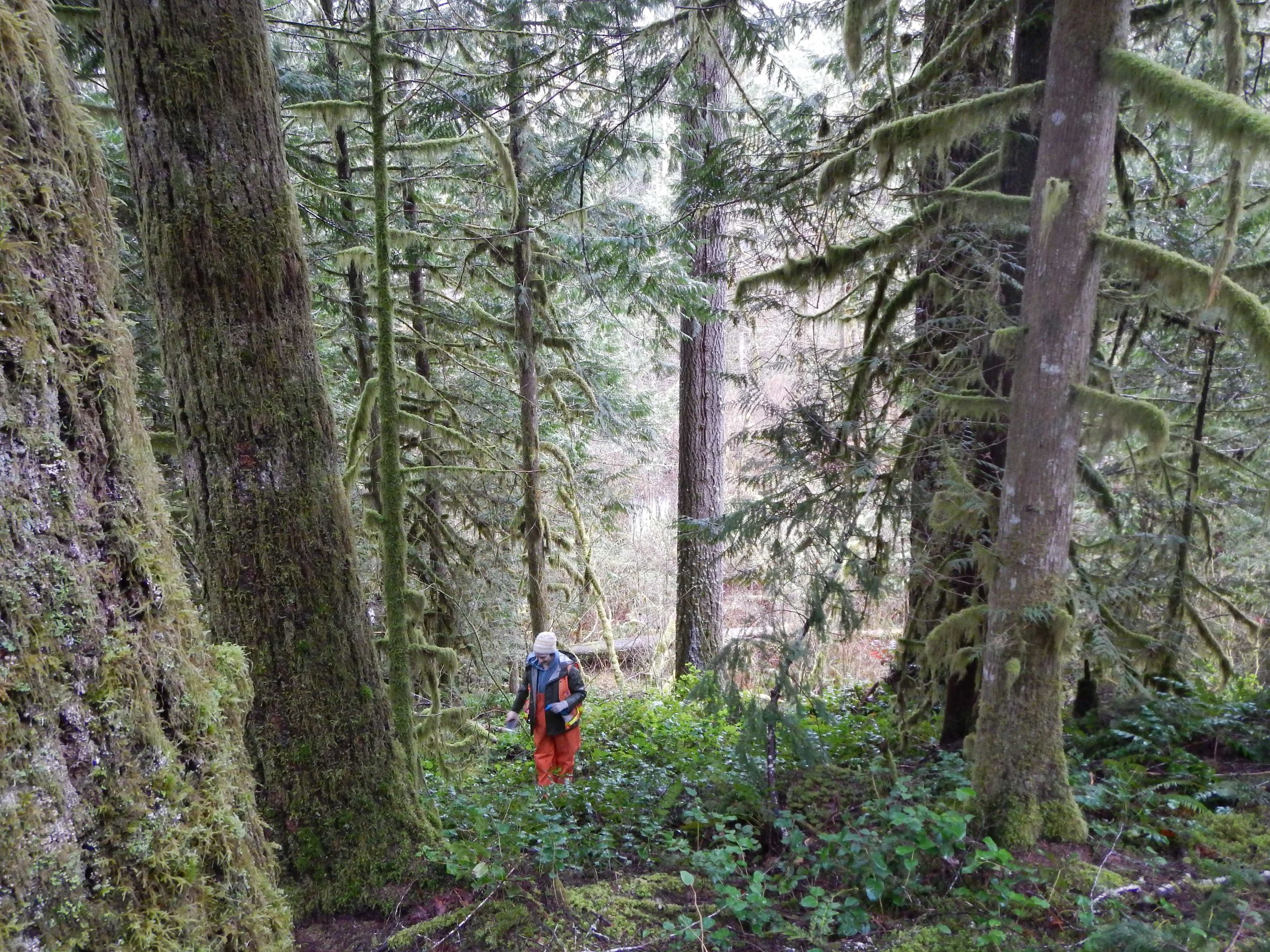 The Watershed Company provided wetland delineation, mitigation planning, and environmental permitting to DNR during the creation of the Darrington Trail.