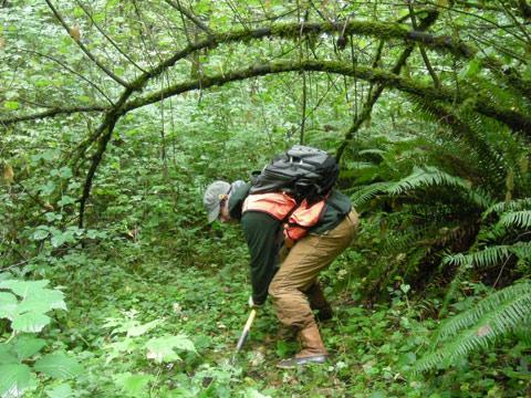A wetland biologist assessing a wetland in western Washington.