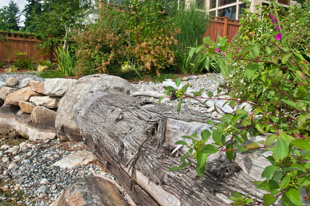 A natural shoreline we designed for a lakefront home in Kirkland incorporates native plants.