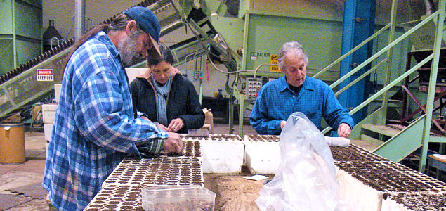 Sowing seeds into container trays by  USFS Region 5