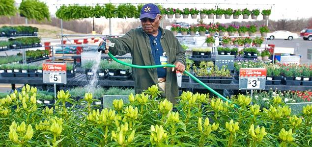 Walmart Associate Waters Plants in the Garden Center by  Walmart Corporate