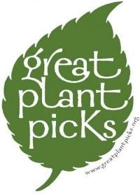 Green Plant Picks